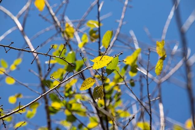 Ramo de folhas amarelas