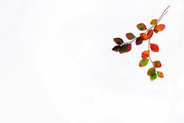 Ramo de folhas de outono isolado em um fundo branco. postura plana. copie o espaço para promoções e descontos sazonais