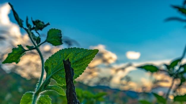 Ramo de folhas verdes