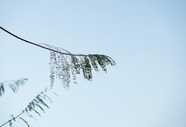Ramo de folhas weid no fundo do céu em vista natural