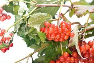 Ramo de frutos vermelhos