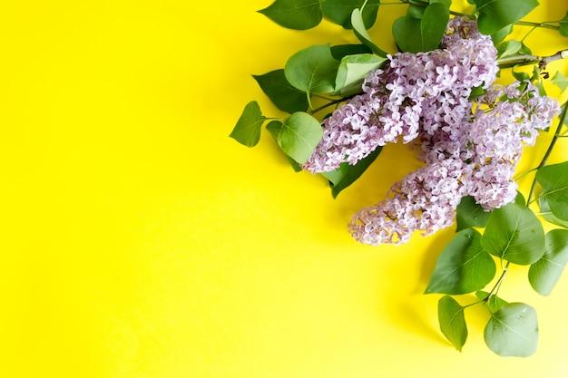 Ramo de lilás roxo amarelo. vista superior, copie.