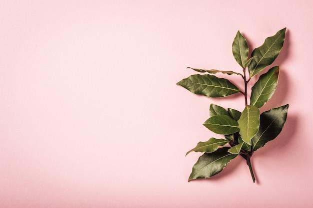 Ramo de louro em fundo rosa