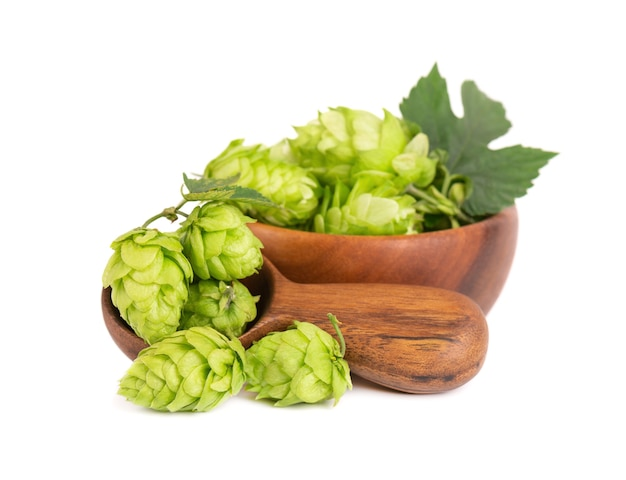 Ramo de lúpulo verde fresco em uma tigela de madeira e colher isolado em um fundo branco cones de lúpulo com folha