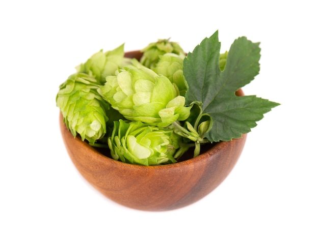 Ramo de lúpulo verde fresco em uma tigela de madeira, isolado em um fundo branco. cones de lúpulo com folha. flores de lúpulo orgânicas. fechar-se.