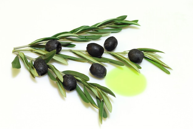 Ramo de oliveira com azeitonas