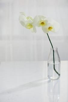 Ramo de orquídea branca em um vaso na mesa.
