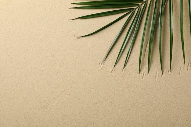 Ramo de palmeira na areia do mar
