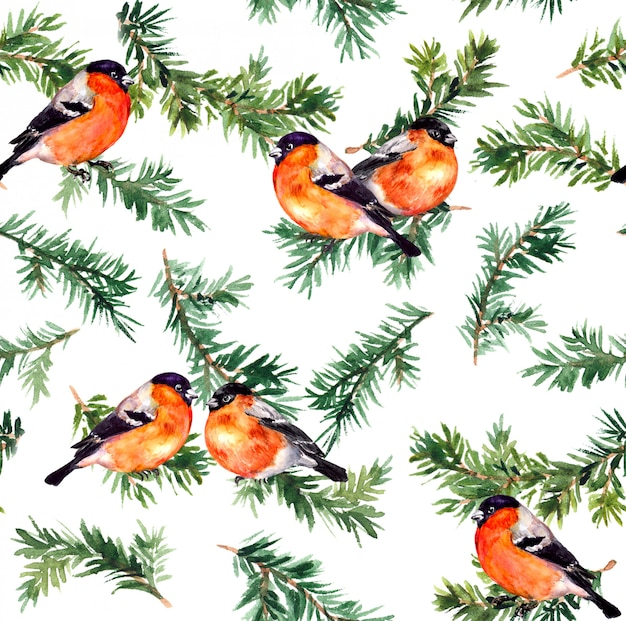 Ramo de pinheiro e pássaro robin. padrão de repetição em aquarela
