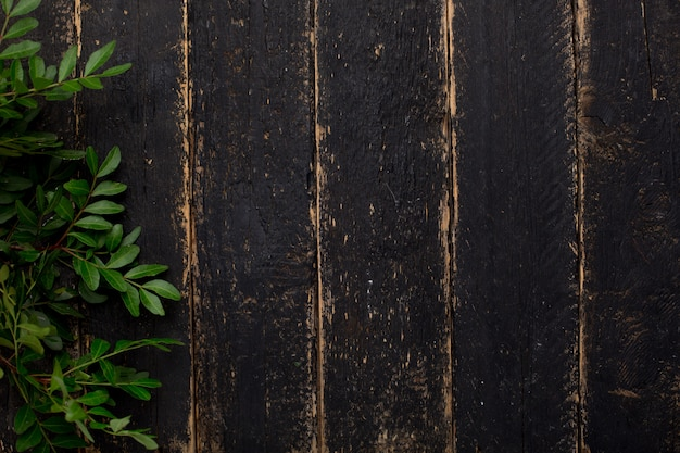 Ramo de pistache verde em madeira escura
