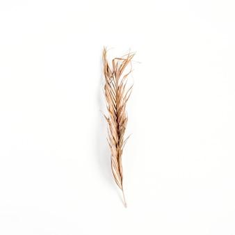 Ramo de planta seca