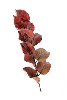 Ramo de prunus roxo em quarto branco