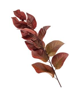 Ramo de prunus roxo