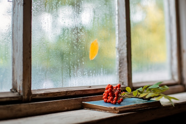 Ramo de rowan na janela molhada de madeira da aldeia