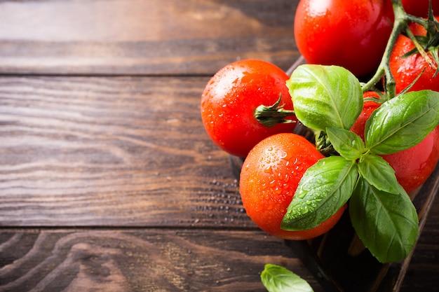 Ramo de tomates naturais maduros e folhas de manjericão