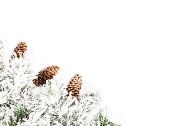 Ramo decorativo spruce coberto de neve com cones em um fundo branco. espaço para texto.