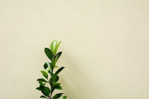 Ramo e folhas com sombra no muro de concreto