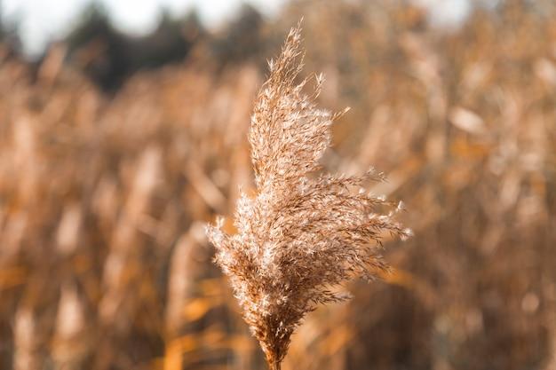 Ramo seco de uma planta em um campo amarelo. lugar para o seu texto