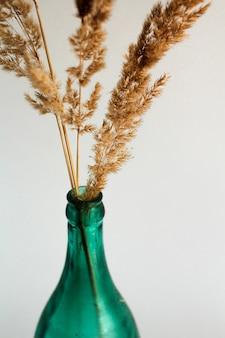 Ramo seco no vaso transparente garrafa verde em um fundo branco
