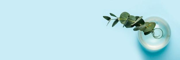 Ramo verde de eucalipto em um vaso de vidro sobre um fundo azul. vista superior, configuração plana. bandeira.