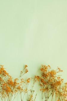 Ramos amarelos de gypsophilia paniculata em fundo verde suave