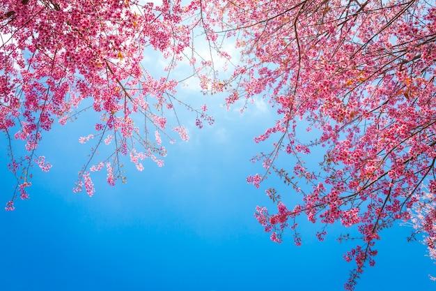 Ramos bonitos de árvores com flores cor de rosa