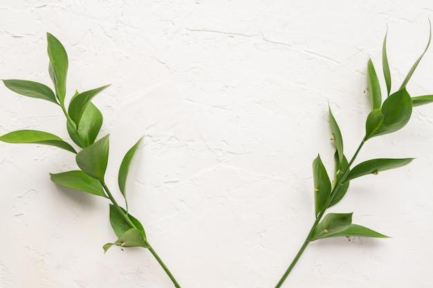 Ramos com folhas verdes frescas de ruscus em concreto branco plano de fundo texturizado. quadro floral com espaço de cópia