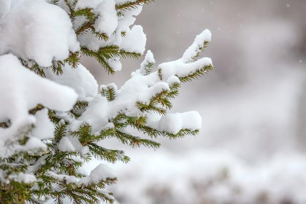 Ramos de abeto cobertos de neve fresca, flocos de neve caindo