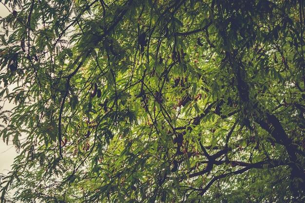 Ramos de árvore