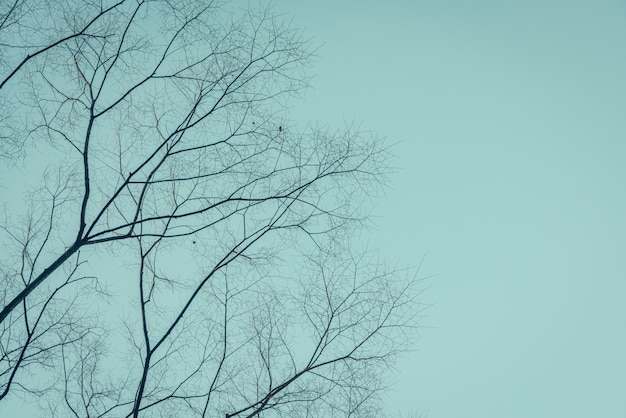 Ramos de árvores (imagem filtrada processados efeito vintage.)
