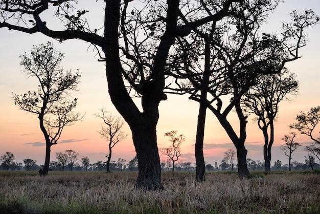 Ramos de árvores mortas e seco arquivado sob o pôr do sol.