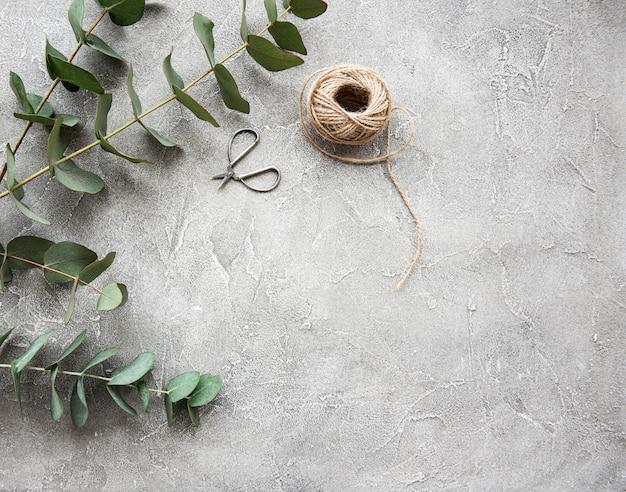 Ramos de eucalipto em um fundo de concreto