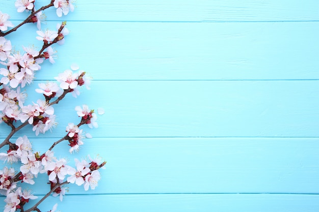 Ramos de florescência da mola no fundo de madeira azul com copyspace.