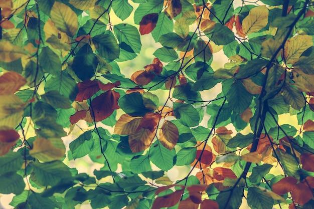 Ramos de folhas de outono coloridas