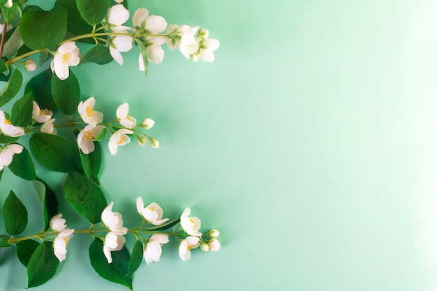 Ramos de jasmim em flor