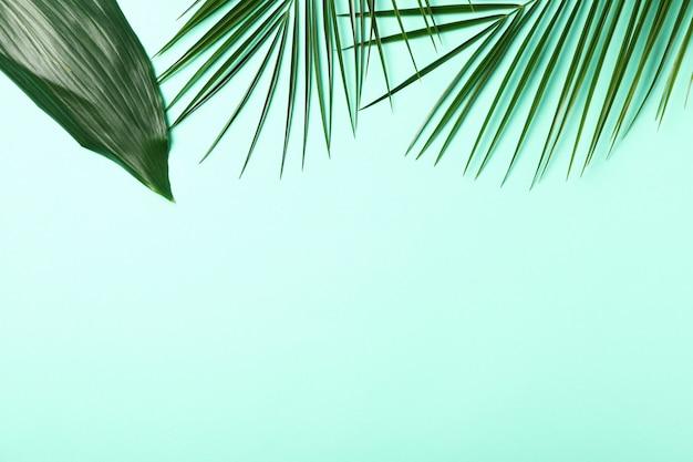 Ramos de palma na superfície verde