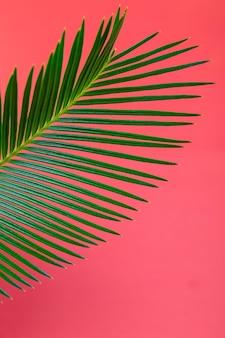 Ramos de palmeiras de fundo tropical