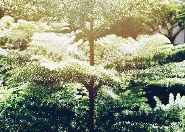 Ramos de pinheiro com luz de sinalização