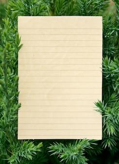 Ramos de pinheiro verde fresco isolados no fundo branco