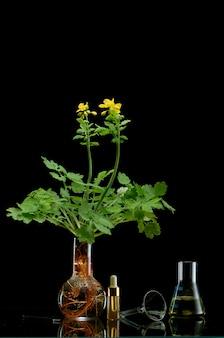 Ramos de plantas frescas em frascos médicos