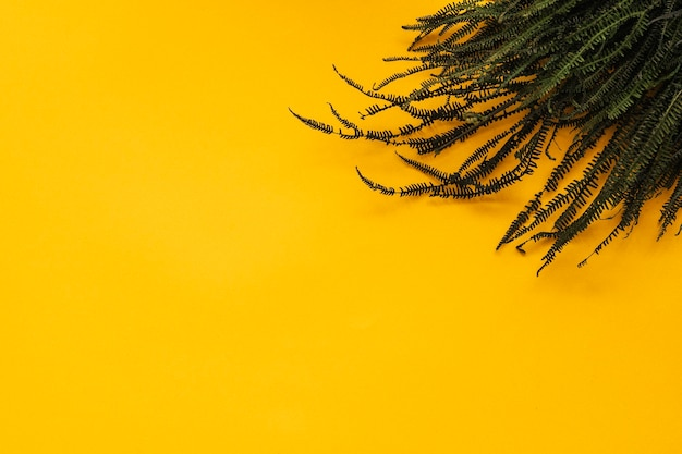 Ramos de samambaia em fundo amarelo