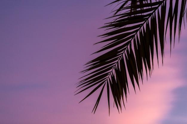 Ramos de tamareiras sob o céu azul no verão
