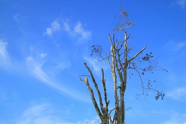 Ramos de uma grande árvore contra o céu azul claro