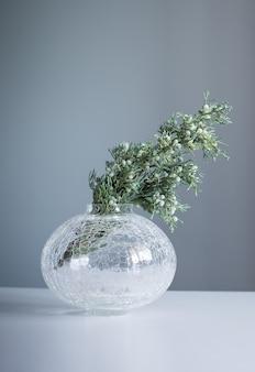 Ramos de zimbro em vaso de vidro em fundo cinza