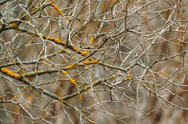 Ramos e botões em uma floresta de primavera, close-up
