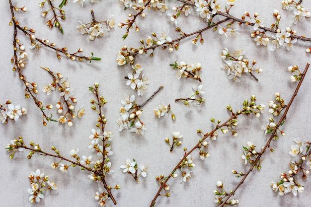Ramos florescendo da árvore de fruta em um cinza