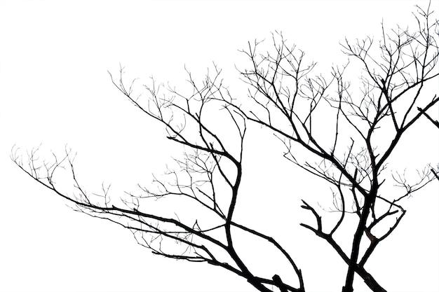 Ramos inoperantes, árvore inoperante da silhueta ou árvore seca no branco com trajeto de grampeamento.