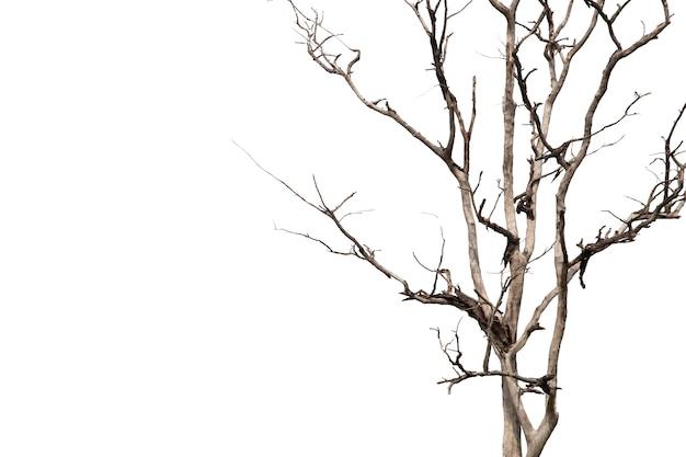 Ramos inoperantes, árvore inoperante da silhueta ou árvore seca no fundo branco com trajeto de grampeamento.