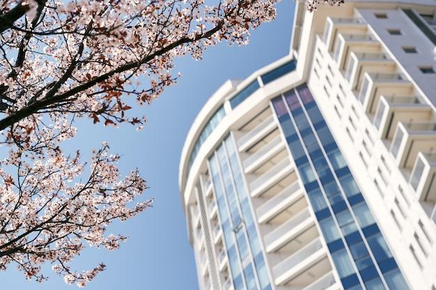 Ramos rosa desabrochando contra o céu azul perto de um close de um belo edifício de vários andares