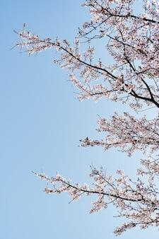 Ramos rosa em flor contra o céu azul, close-up